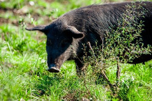 猪价高企对需求已产生明显的抑制作用