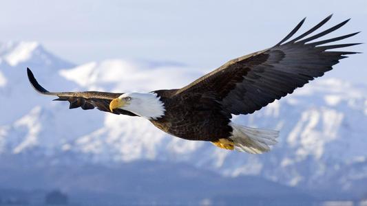 鹰一样的个性,狼一样的团队!